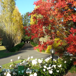 melview-autumn-drive-250
