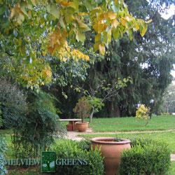 melview-garden-1-250